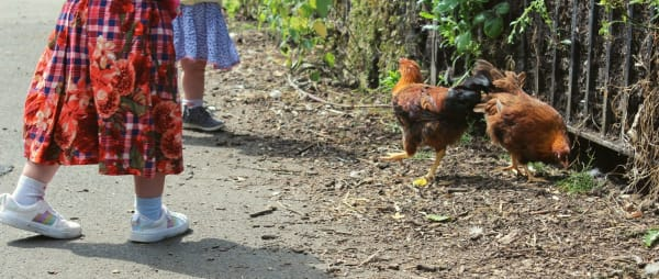 Photo of children playing with chickens at Ouseburn Farm